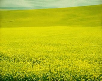 Nature photography, spring fields, landscape art, whimsical fine art, 10x8