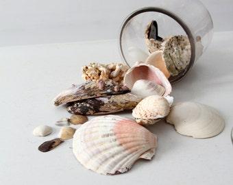 vintage seashell collection, mixed sea shells