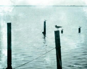Seagulls Photograph Pale gray Aqua Wall Art Seascape Seagulls Quiet Ocean Photograph 8x8