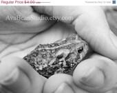 CRAZY SUMMER CLEARANCE Little Treasure - Fine Art Lustre Print