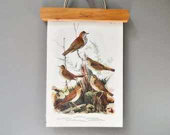 Vintage Bird Book Plate - Wood Thrush and Veery - 1940s