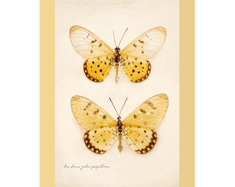 Butterfly art, butterflies, butterfly photography, butterflies art print wall art, yellow orange, beige spring bathroom decor fine art print