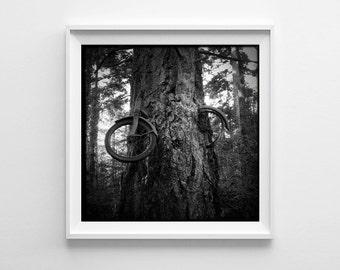 Seattle Art Vashon Island Bike Tree Black and White Photograph, Bicycle Art, Cycling Art - Small and Oversized Art Sizes Available