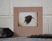 Crow Note Card, Rook print, recycled card-stock, small crow photo, crow card, crow in flight, corvid card