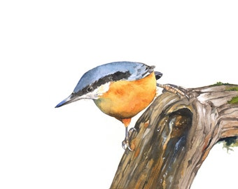 Nuthatch bird watercolor painting - bird art print of watercolor painting 5 by 7 print wall art print  bird art - art print - wildlife print