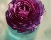 Purple ranunculus photograph- spring, teal, rustic, romantic, flower, floral wall art, botanical, vase, petals, 8x10, fine art photograph - dullbluelight