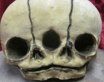 Fetal Skull Replica ceramic finished cast siamese conjoined twin curioddity