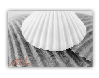 Bathroom Decor Wall Art, Black and White, Seashell Art, Wall Decor, Bath Decor, For Home, Sea Shell Photograph, 8x12, 11x17, 16x24, 20x30