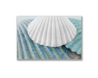 Blue, Teal Art, Seashell Wall Decor, Seashells Art, Sea Shell Photography, Home Decor, Wall Art, Wall Picture, Bathroom Art, Bath Decor
