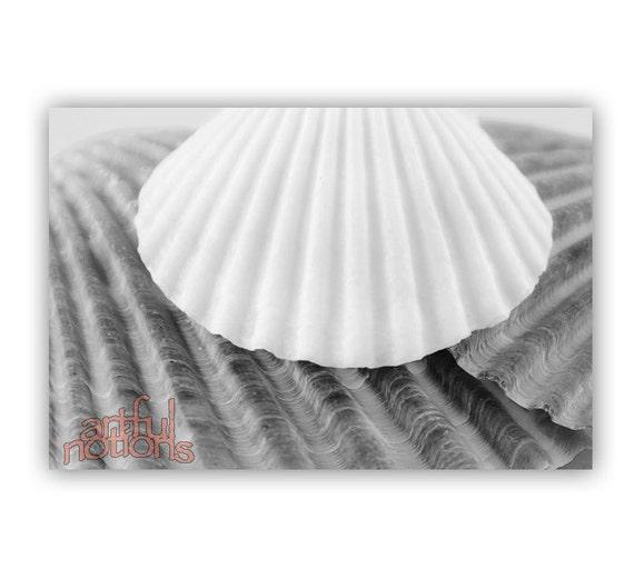 Black and White, Seashell Photography, Bathroom Decor, Wall Art, Sea Shell Art, Bath Decor, For Home, 5x7, 8x12, 11x17, 16x24, 20x30