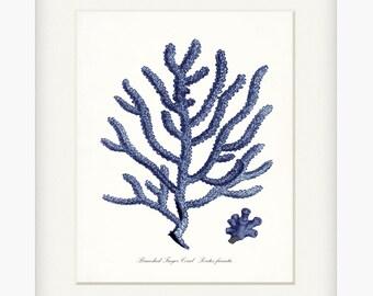 Coastal Decor Sea Coral Branched Finger Coral Giclee Art Print 8x10 Indigo Blue