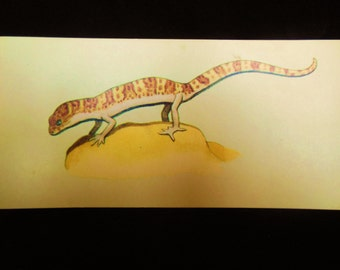 Vintage Reptile Flashcard Color Decor Paper Ephemera Banded Gecko 1960's (item 12)