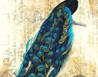 Vintage Italian Peacock Colorful Whimsical Wall Decor At Checkout, Choose Lustre Print or Gallery Wrapped Canvas