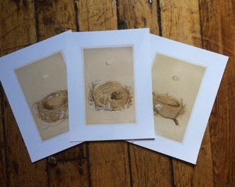 BIRD NESTS & EGGS - set of 3 prints - ornithology giclée - English c. 1875 - willow warbler - garden warbler - redbreast robin