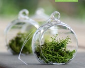 2 Inch Hanging Globe Glass Orb Terrarium Container Wedding Centerpieces Ideas 12pc/pack