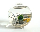 Marimo Moss Ball Bio Orb, Glass Bowl Terrarium with Sea Fan, Aqua Plant Ecosphere, Living Home Decor, Glass Bubble Vase, Green Plant Decor