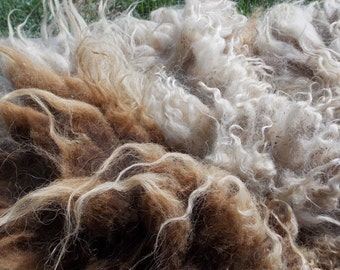 Reserved  Unwashed Shetland Sheep Wool Brown and White - Whinerferd 3 1/2 lb