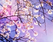 Flower Photography - fine art photo crabapple tree purple stars galaxy sky magical photograph nursery kids room wall art home decor