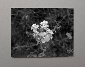 White Flower Art Black and White Fine Art Photography Print Macro Flower Photographs Wall Art Christmas Gift Ideas Great Grandmother Gift