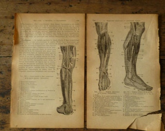 6 Antique Anatomy of the Feet and Legs Pages French Circa 1910 Paper Book Illustrations Lot A6