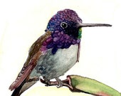 ACEO Limited Edition -Magnificient creation, Art print of an ACEO original watercolor, Gift idea for House warming & HummingBird lovers