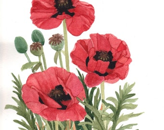 Red Poppy Field  7x Original Watercolor Painting