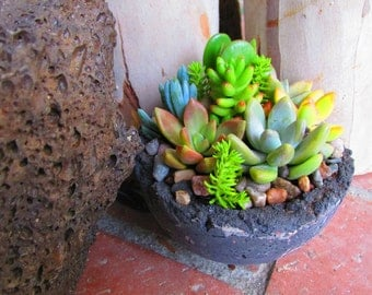Handcrafted Succulent Living Arrangement