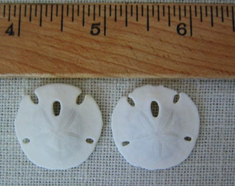 2 SMALL SAND DOLLARS For Craft Projects 1-inch White