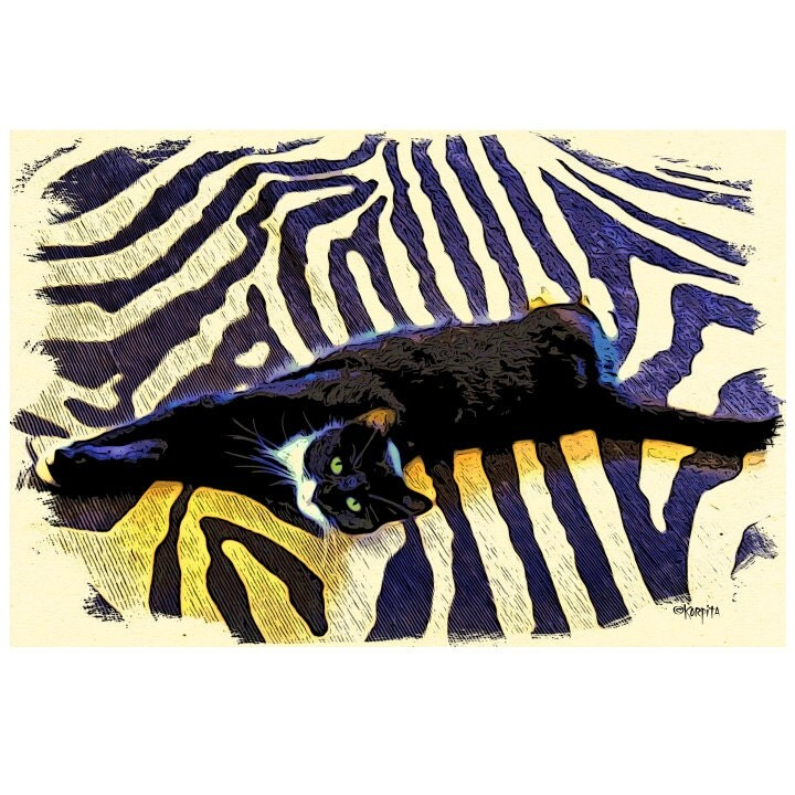 Tuxedo Cat On Zebra Rug 8x12 And 10x15 Glicee Print From