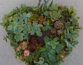 "DIY SUCCULENT WREATH, Heartshape Wreath Kit - 11"" wreath form, 65 assorted succulent cuttings, 65 floral pins"