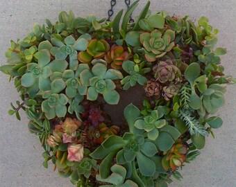"DIY SUCCULENT WREATH, Heartshape Wreath Kit - 11"" wreath form, 65 assorted succulent cuttings, 65 floral pins"