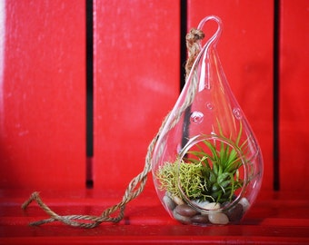 9GreenBox -  Air Plant Tillandsia Bromeliads TearDrop Terrarium Kit - Moss & Pebbles Holiday Gift - FREE SHIPPING