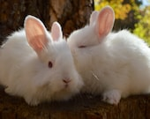 "Baby Woodland White Bunny Rabbits Kiss 8x10"" Photograph Print"