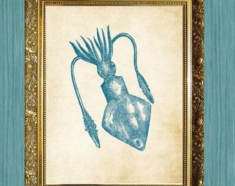 Teal Squid Print 8 x 10  Print Sea Life Art Print Seaside Art Print Sealife Art Print Natural History Print