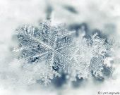 "Winter Photography - snowflake wall art nature photography blue Christmas holiday decor, winter wall art white 8x10 11x14 5x7 - ""Crystal"""