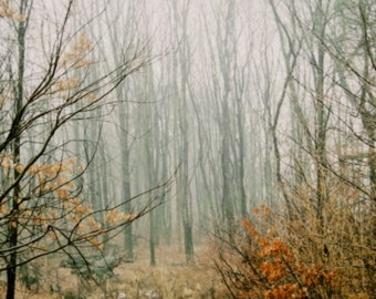 Mysterious Path - Foggy Woodland - Nature Landscape - Woods in The Mist - Autumn Leaves - Winter Scene - Forest Photograph