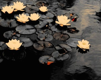 Water Lily - Spring Flower - White Water Lily - Water Lily Pond - Cloud Reflections - Water Lily Art - Wall Decor - Nature Flower Photograph