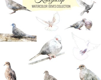 Watercolor Dove Collection- Commercial and Personal Use
