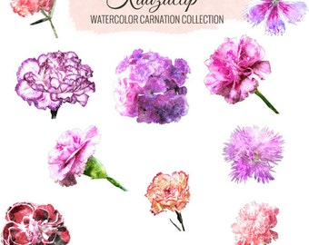 carnation personals Learn about the january birth flower, the carnation, including interesting facts about january zodiac signs and famous birthdays.