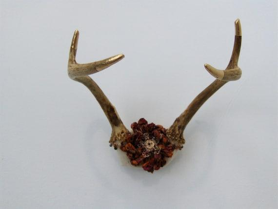Vintage Deer Antler Decor Country Chic Rustic By KnotKnotShop