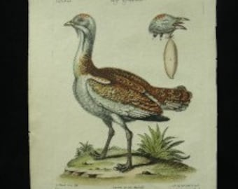 George Edwards Bird Copperplate Engraving Male Bustard Antique Print 1758 - 1764