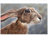 Hare Wildlife Portrait by award winning artist JOHN SILVER. Personally signed A4 or A3 size Print. HA003SP