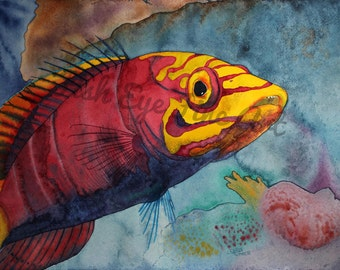 Watercolor Fish Art Painting Mystery Wrasse Tropical Fish Limited Edition Museum Quality Giclee Print by Chris Turnier