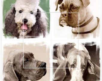 Cute Dogs - 4 Digital Collage Sheets CP-151 - 4x4 inch tiles for Scrapbooking Coasters Stickers - Instant Download