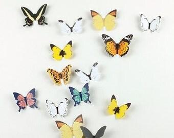 Butterfly Wall Deco Sticker / 10855583