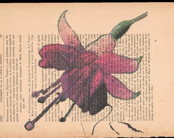 Flower prints on sheets of paper. Page 33, fuchsia single.