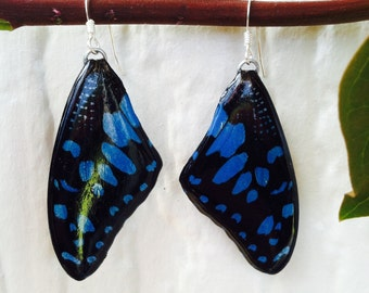 Real Butterfly Wing Earrings