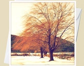 Wisps of the Willow - Winter in Upstate New York - 5x5 Square Eco Flat Card or Folded Note Card - Fine Art Photography