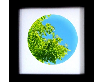 Nature Photography, green and blue Summer Wall Decor, art, trees, leaves, sky 8x8