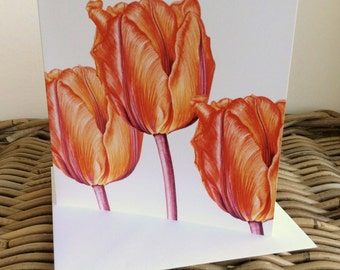 Tulip 'Princess Irene'  art card - blank inside